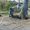 photo Talbot Mackenzie &amp; Associates Consulting Arborists